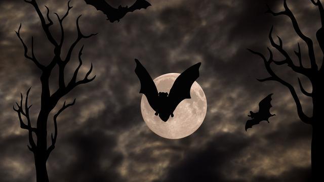 Ilustrasi kelelawar.