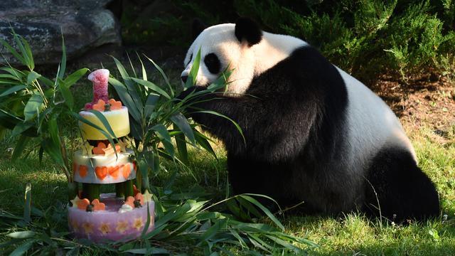 Panda Yuan Meng