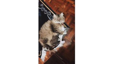 6 Potret Lucu Kucing Temani Salat Tarawih, Bikin Gemas