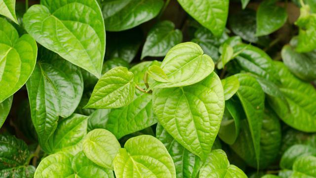 21 Cara Menghilangkan Bau Ketiak yang Mengganggu dan Membuat ...