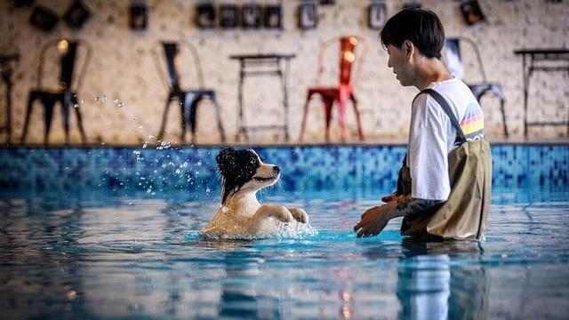 pria china bangun rumah mewah buat anjing (foto: china daily)