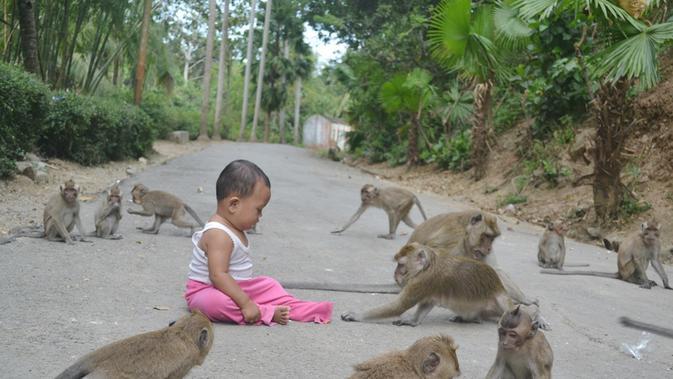 Ratusan ekor monyet keramat penunggu masjid tinggal di sekitar Masjid Saka Tunggal, Cikakak, Banyumas. (Foto: Liputan6.com/Muhamad Ridlo)
