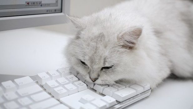 cat lying on keyboard