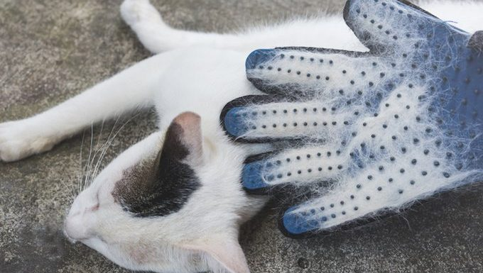 glove with cat fur
