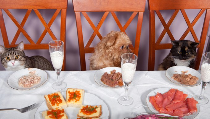 cats sit at table with dog