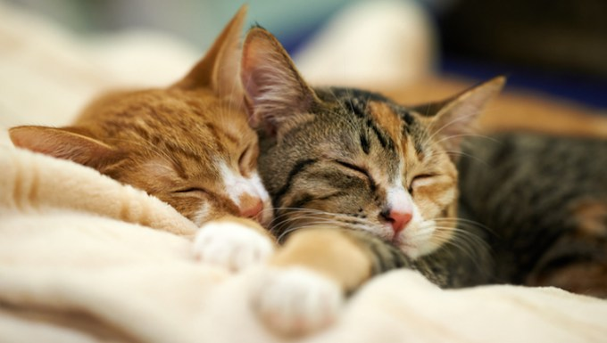 Two cats napping