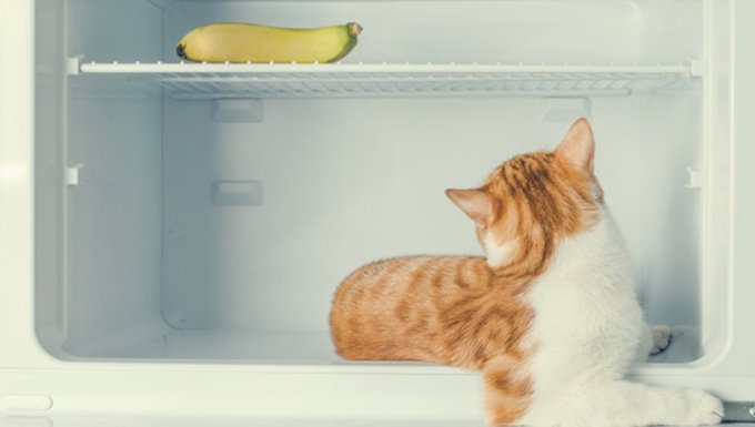 Cat and banana
