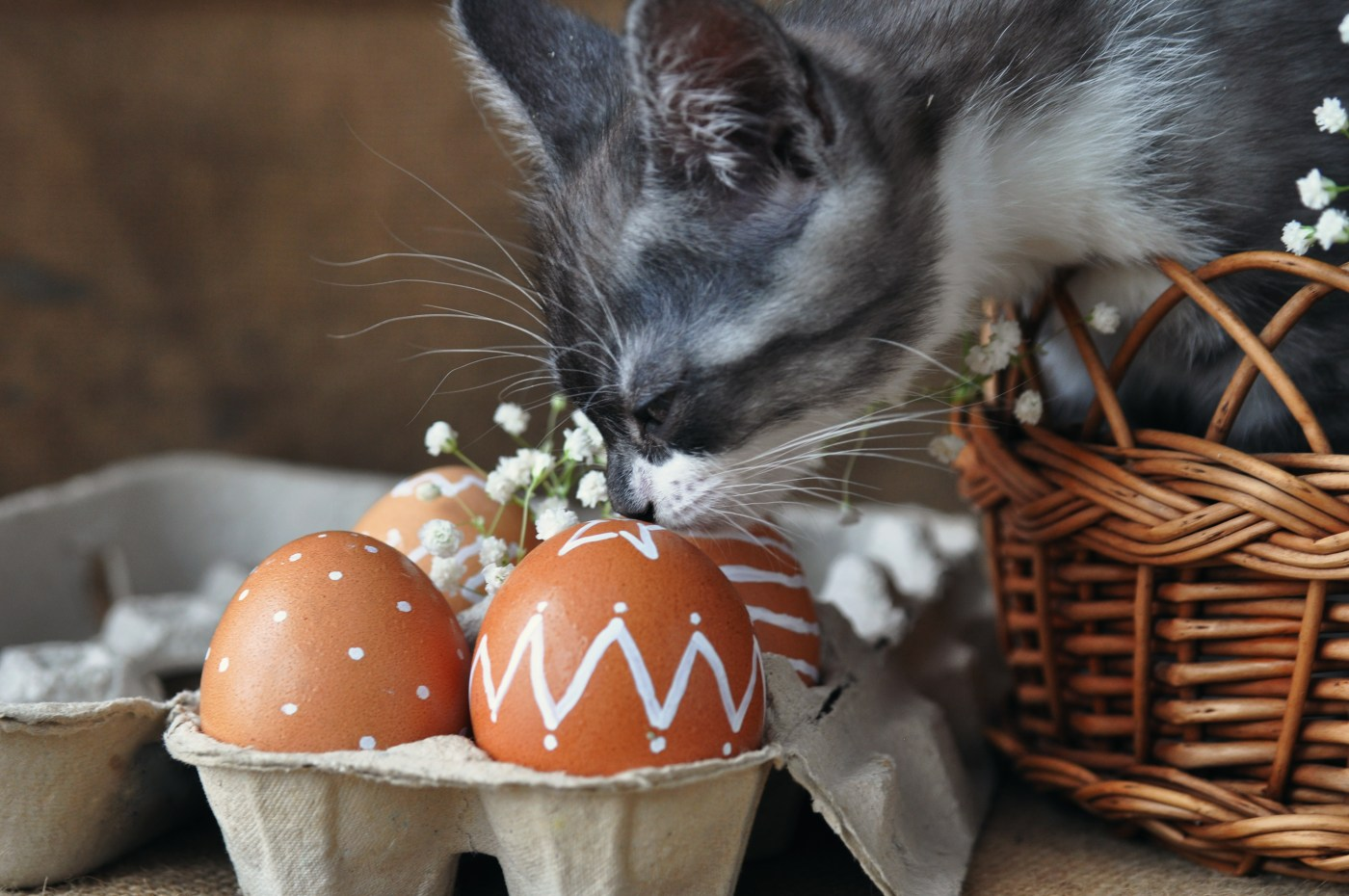 Easter Cat And Kitten Pictures