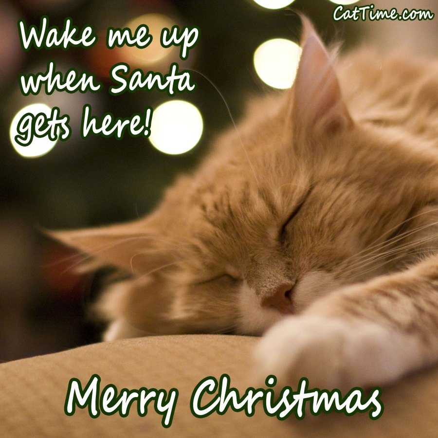 Wake Me Up When Santa Gets Here