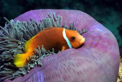 Scuba-diving over healthy reefs