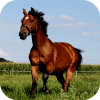 🐴 Horse Wallpapers