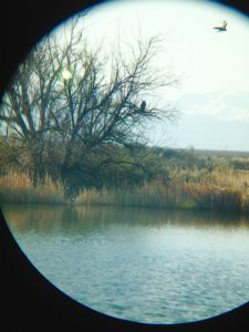 A blurry view of the owl we scared off through my binoculars
