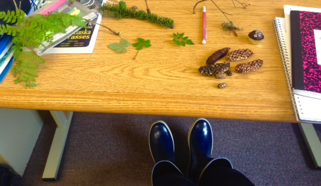 Plants and cones on a desk, planning plant talk for girls scouts