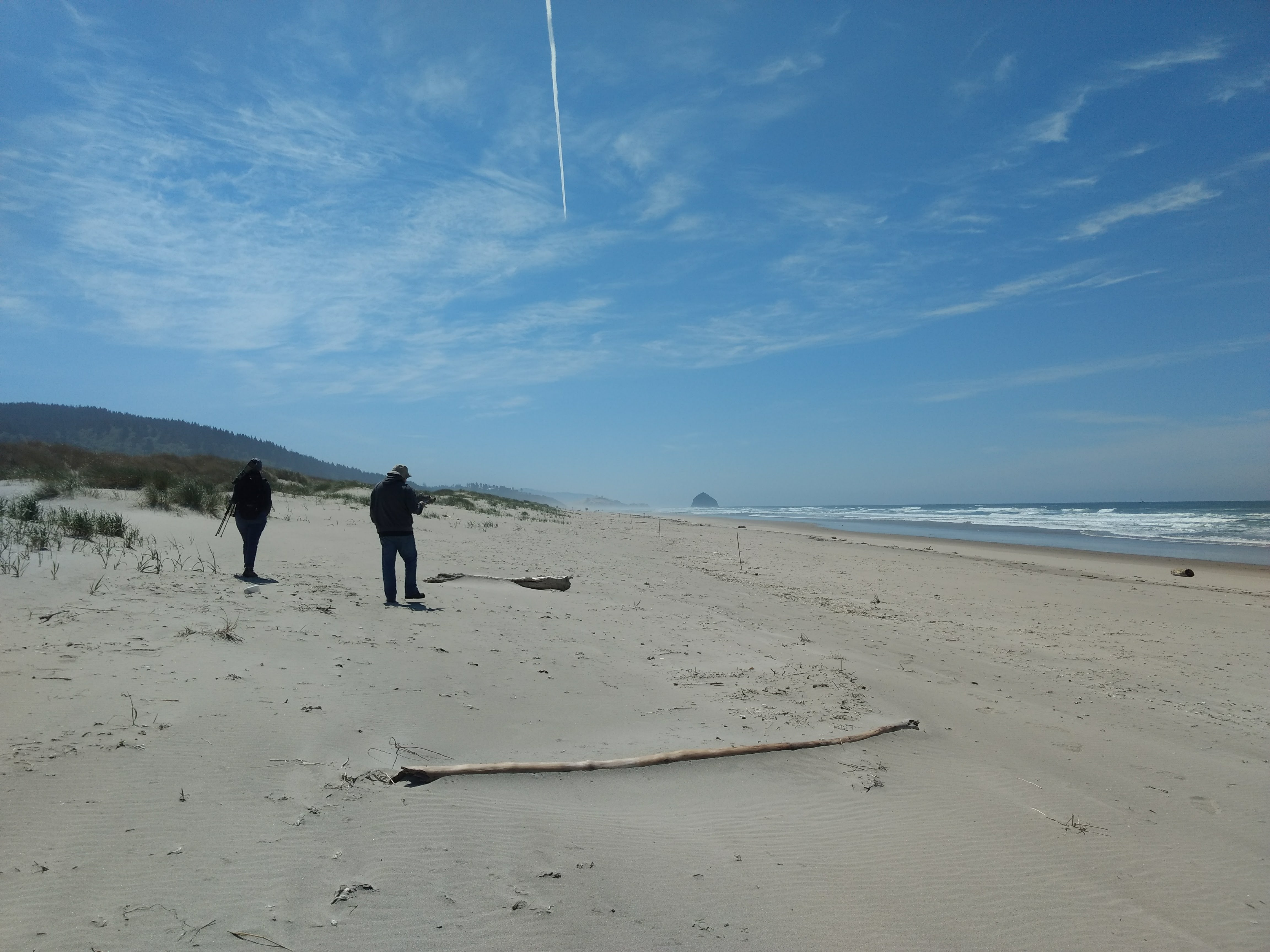 Out in the beach doing Nest Detection Surveys
