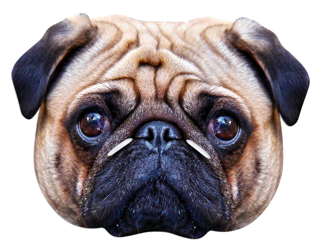 Pug Dog Single Card Party Face Mask In Stock Now With
