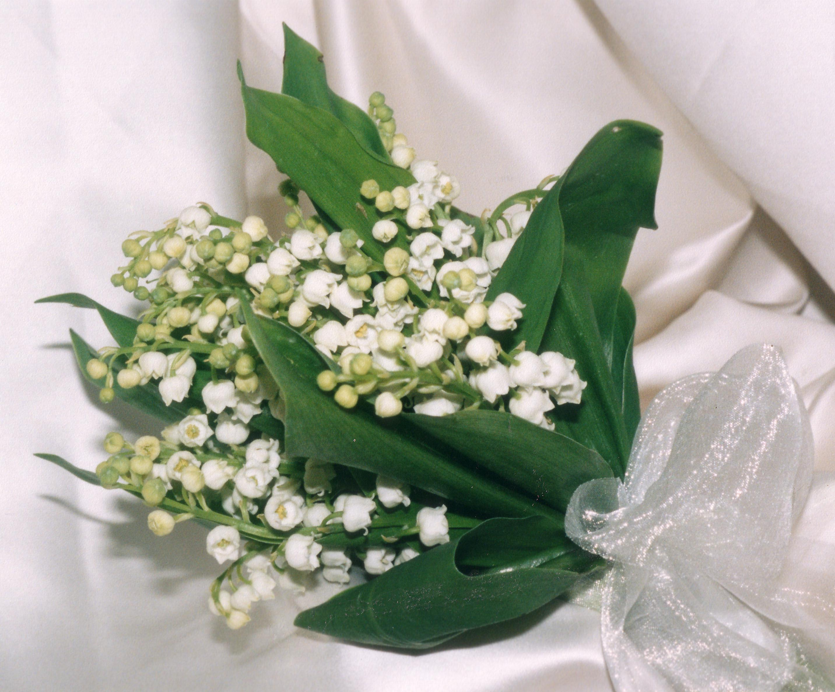 Feature Flowers This Week Are Lily Of The Valley, Freesia