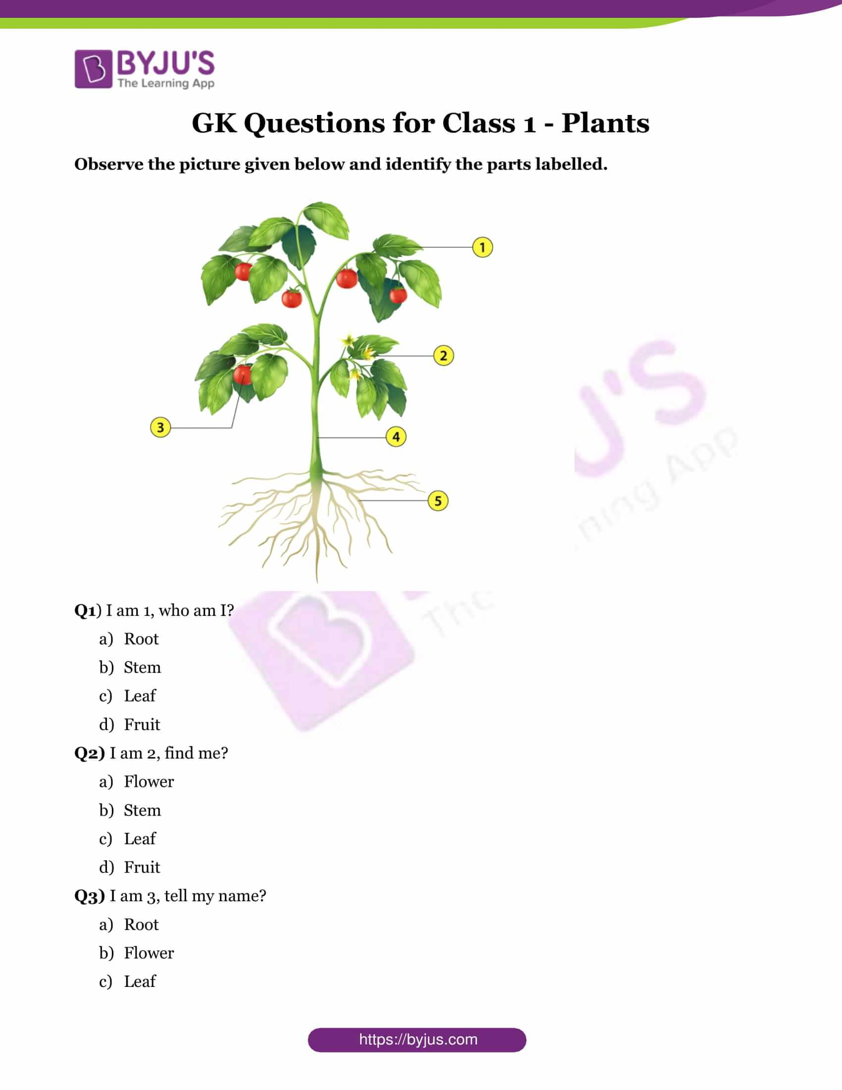 Questions About Plants For Class 1 Kids