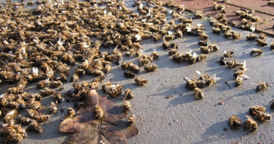 """Image result for """"Like It's Been Nuked"""": Millions of Honey Bees Die Right After Aerial Spraying for Mosquitoes"""