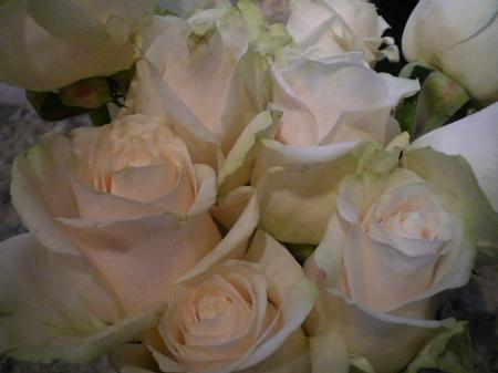 Tending to the Rose Garden