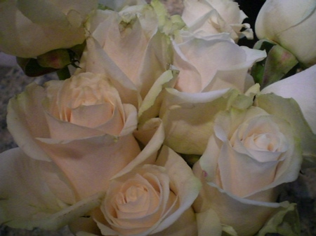 Caring for Roses, final chapter