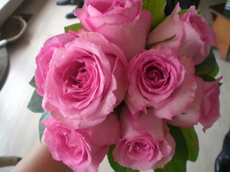 Growing Beautiful Roses-Southern California