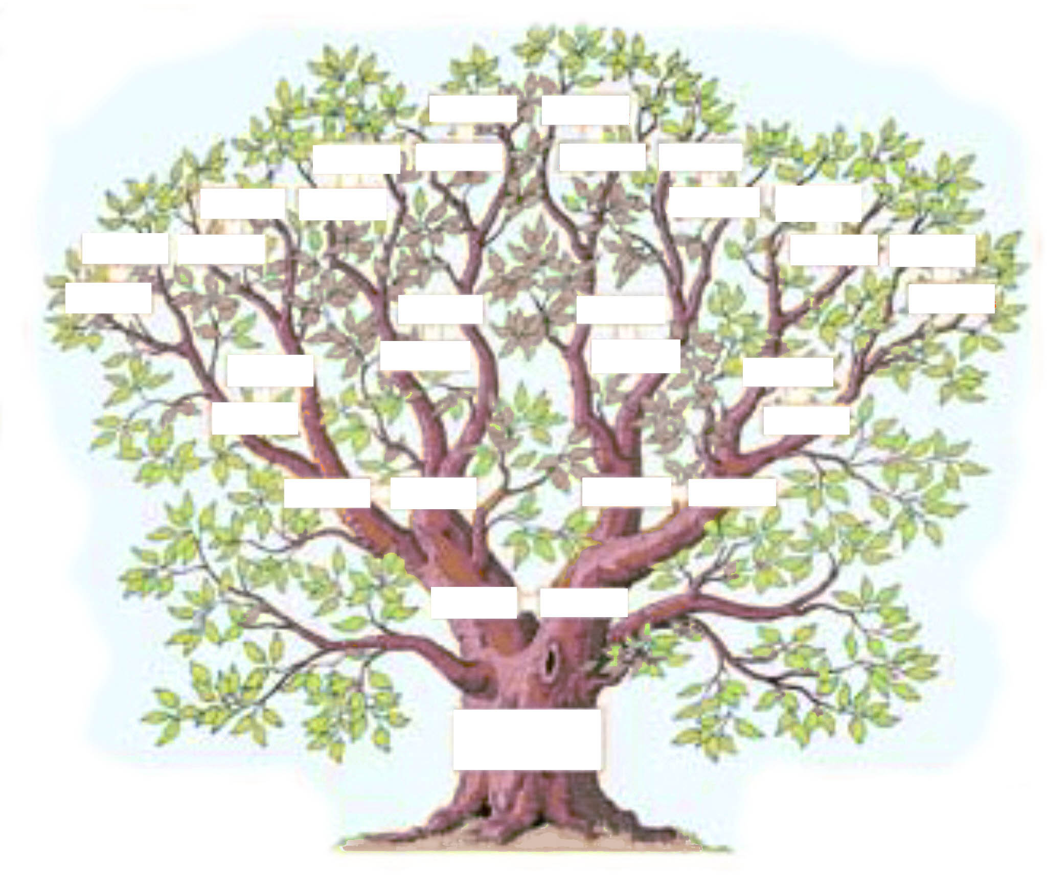 L Arbre Genealogique Exercice
