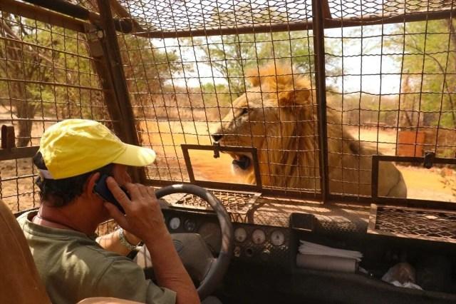 Senegal'de tehlikeli safari turu: Bu kez kafeste insanlar var - 11