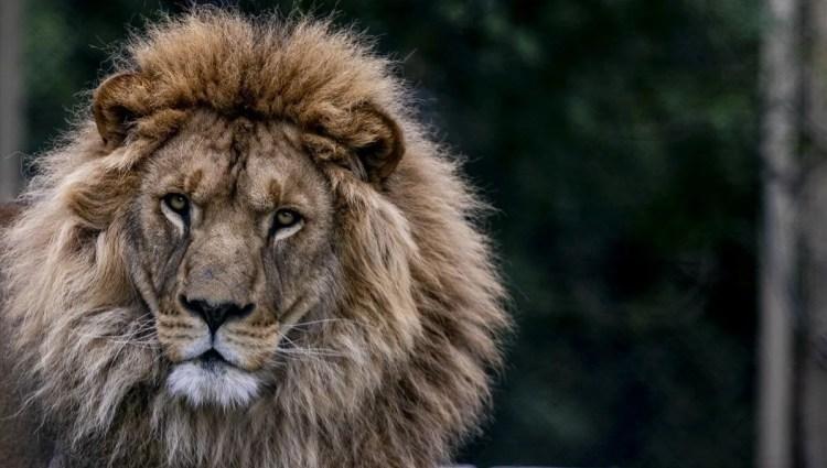 Antalya Hayvanat Bahçesi ziyaretçilerini bekliyor