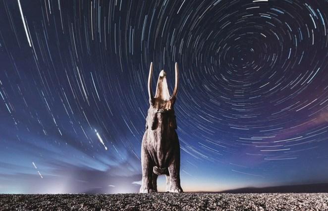 10 bin yıl önce yok olan yünlü mamutlar yeniden doğacak - 1