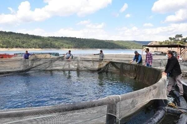 Denizi olmayan Manisa'dan dünyaya balık ihracı - 13