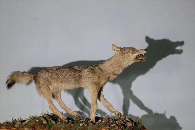 Van'da yaban hayvanları tahnit sanatıyla müzede tanıtılacak - 24