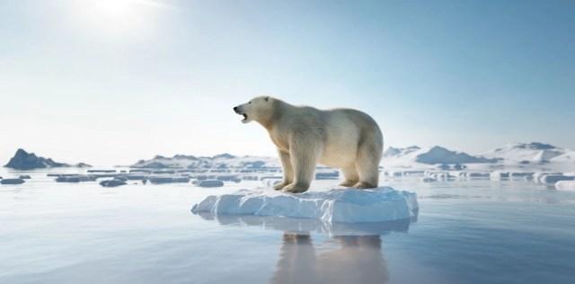 İklim değişikliği ve çevre kirliliği denizlerdeki tüm memeli türlerin yüzde 25'ini yok etmek üzere - 9