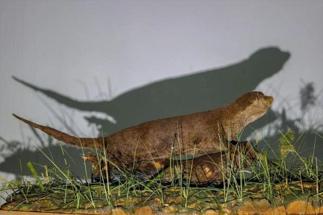 Van'da yaban hayvanları tahnit sanatıyla müzede tanıtılacak - 30