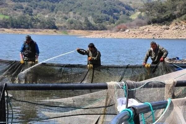 Denizi olmayan Manisa'dan dünyaya balık ihracı - 8