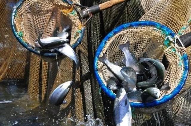 Denizi olmayan Manisa'dan dünyaya balık ihracı - 1