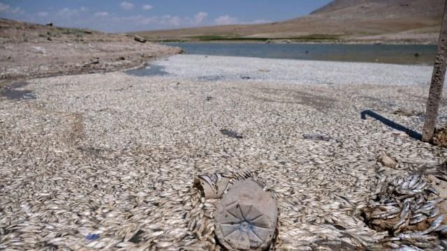 May Barajı'nda korkutan görüntü: Sular çekildi, binlerce balık telef oldu - 16