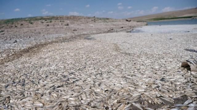 May Barajı'nda korkutan görüntü: Sular çekildi, binlerce balık telef oldu - 5