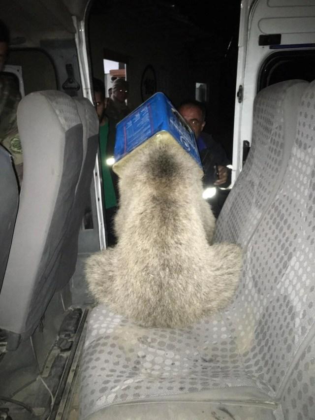 Ağrı'da ayı kurtarma operasyonu - 1