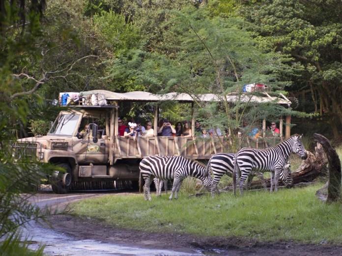 Guests are Seeing Stripes at Disney's Animal Kingdom — Zebras Out on New Kilimanjaro  Safaris Savanna | Disney Parks Blog
