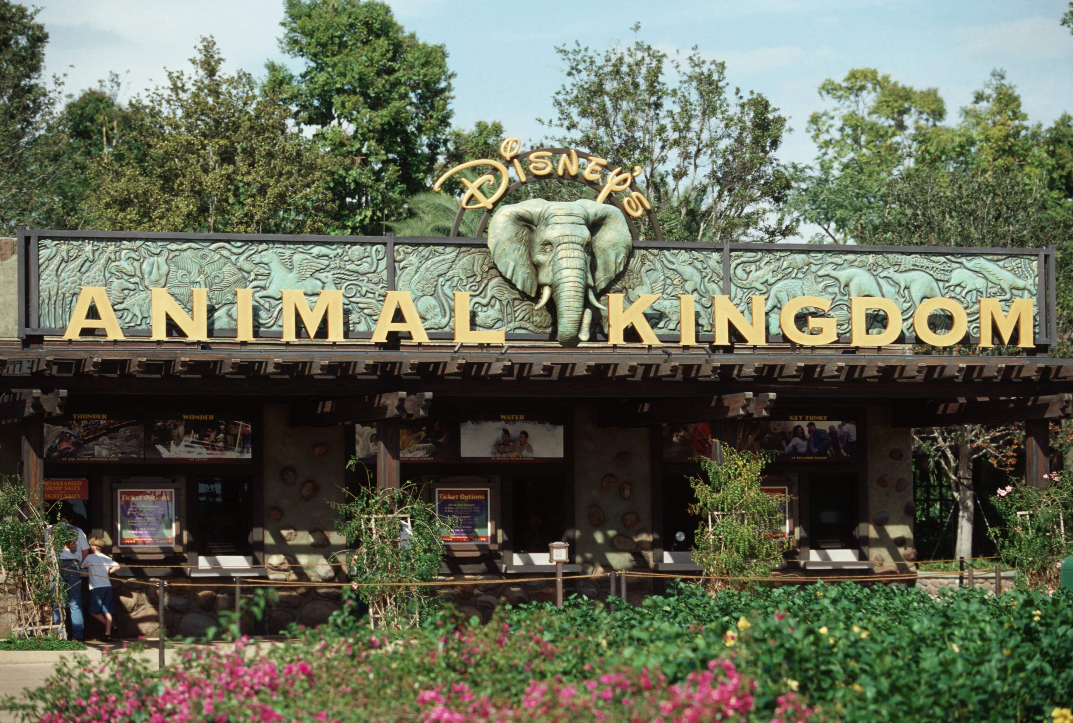 Sign Up For A Chance To Tour Backstage At Disney S Animal