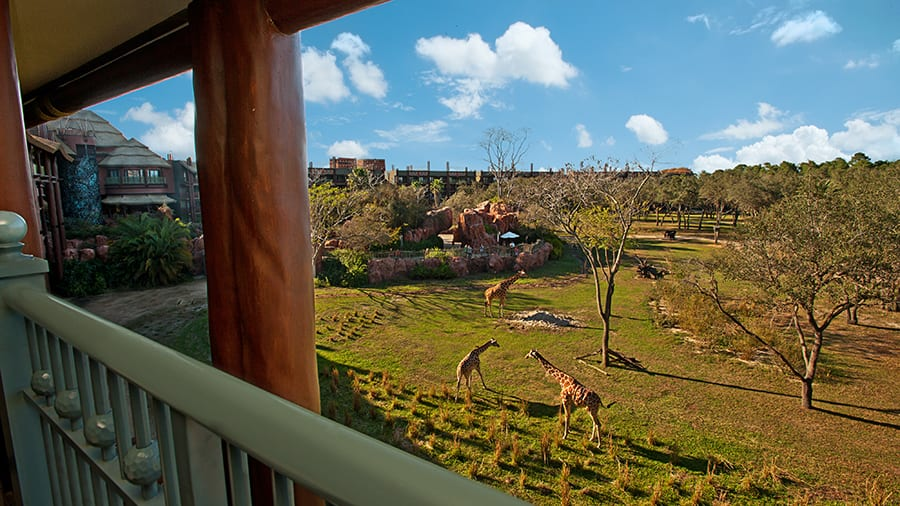 Room With A View: 'Safari View' Suite At Disney's Animal