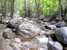 Sturtevant Creek