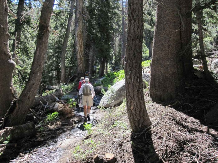 Most of the trail is forested