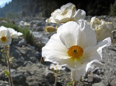 Bee meets flower