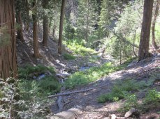 Much of the lower-half of the trail is well shaded