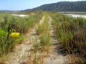 This road is closed, leading to two nesting areas for protected birds.