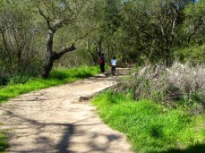 An easy trail to hike