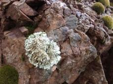 Lichen on Bald Mountain