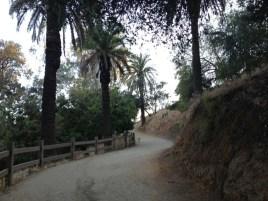 Trail back to Vista Street Entrance