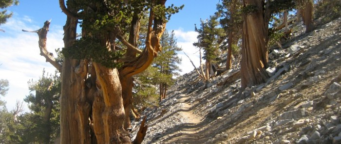 Panorama along the Sky High trail en route to San Gorgonio